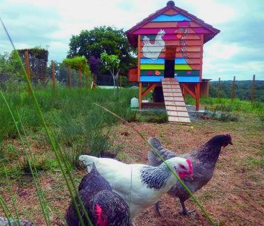 poules_luchapt1